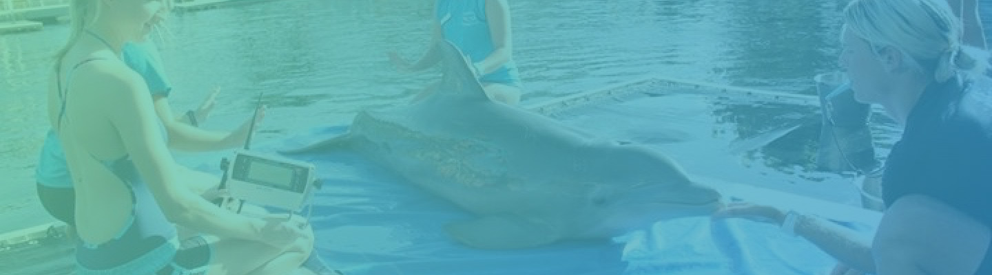 Marine Mammal Educational Classes in Key Largo