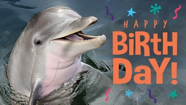DPMMR Dolphin Birthday