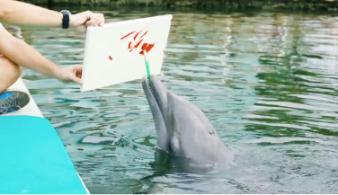 Dolphin painting on a canvas