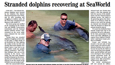 Stranded Dolphins Recovering at Seaworld