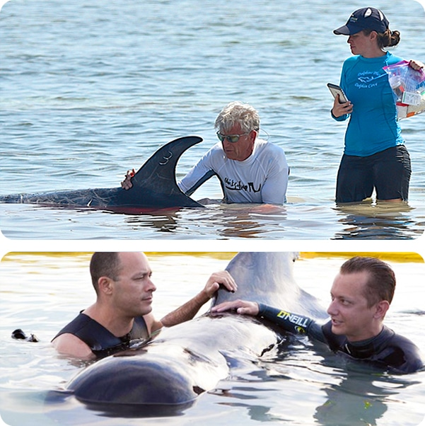 People rescuing dolphins near the shore