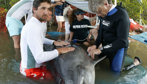 Team members rescuing a dolphin