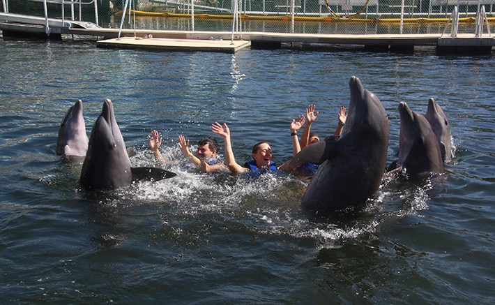 Group of people waving with dolphins