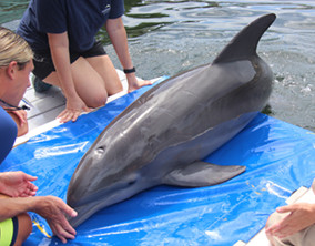 Caring for Dolphins Demo